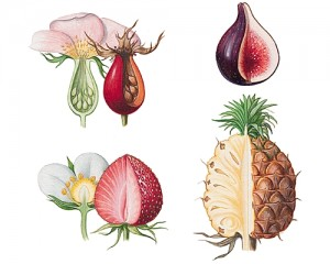 1001109-Fruits_dérivés