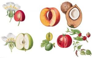 1001112-Fruits_charnus
